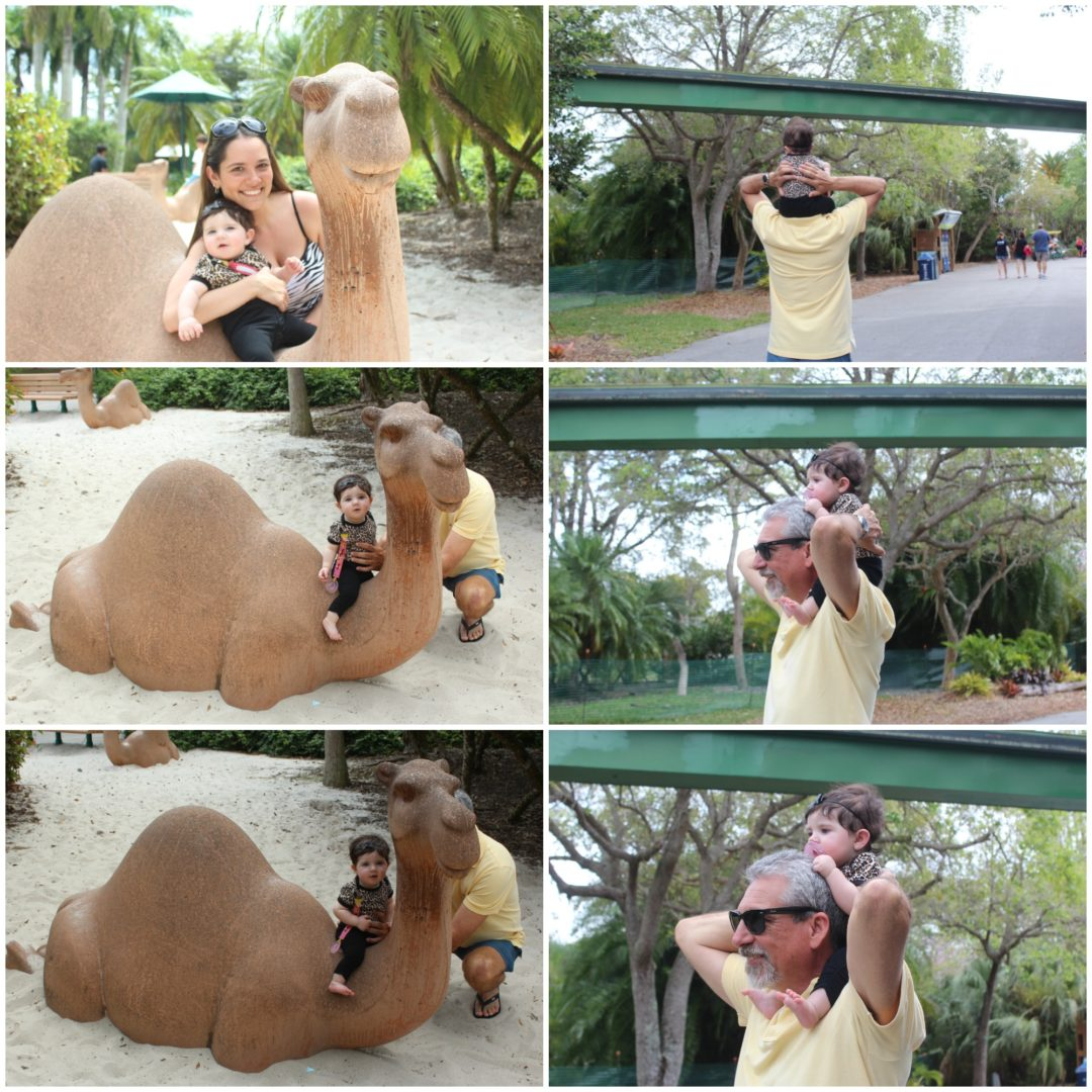 Zoo Collage3