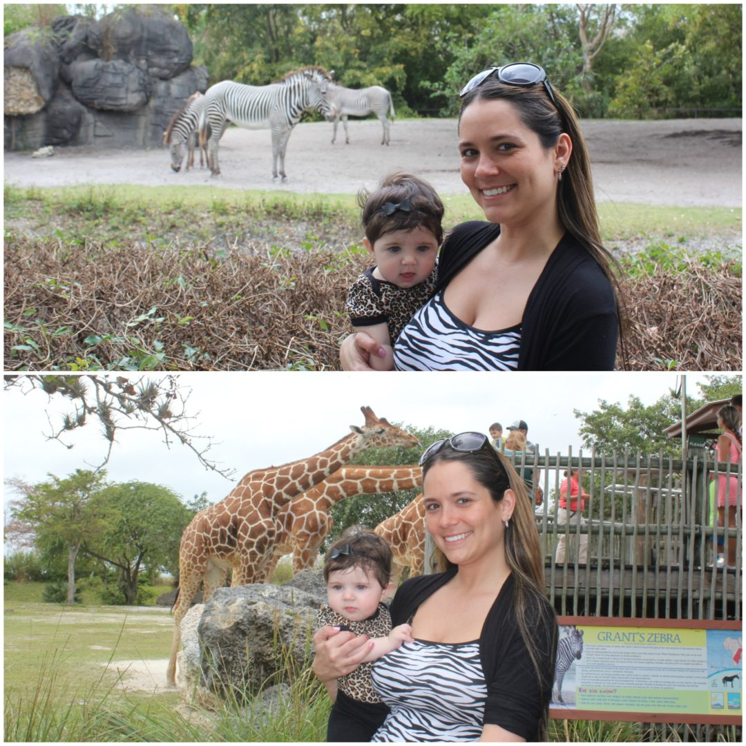 Zoo Collage6